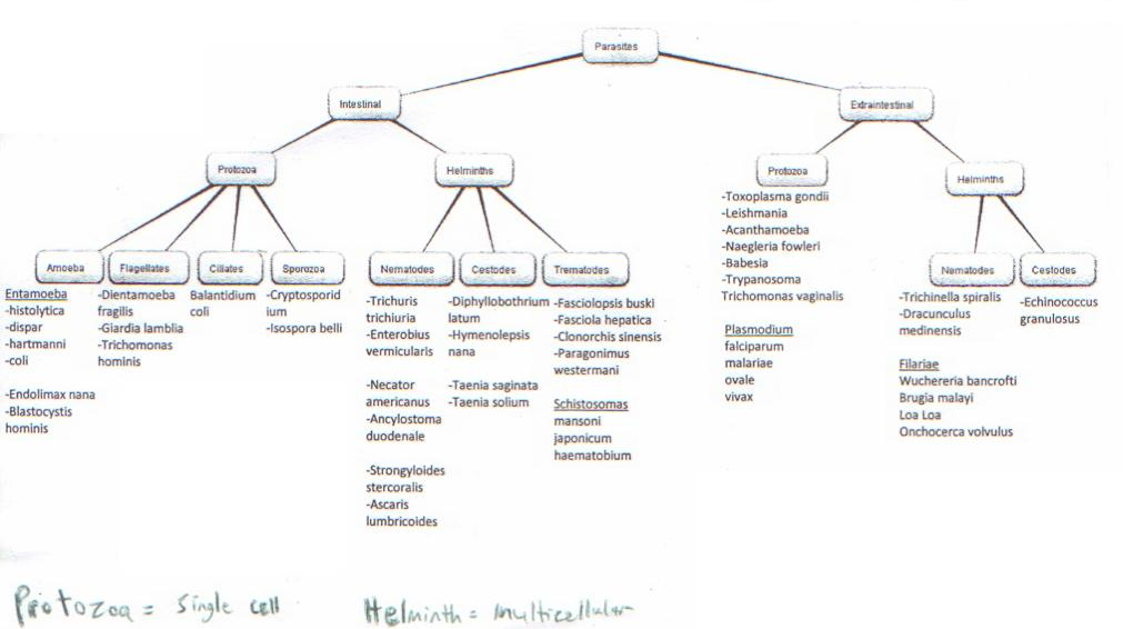 importance of microbiology in medicine pdf